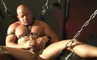 shaved musclebull akos piros